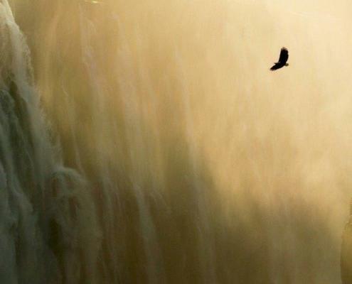 Blog - Frei wie ein Adler - Beitrag Marion Welz