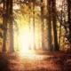 Trage dein Licht in die Welt - Beitrag Marion Welz Berlin